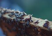 Bees – Hayredin